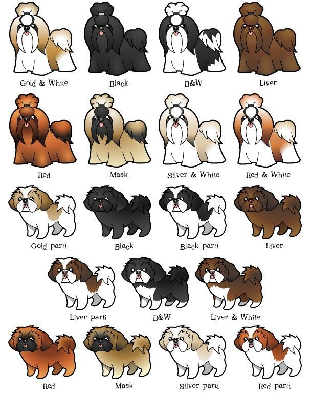 Dog clip art realistic. How to draw dogs