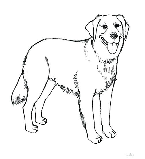 Labrador drawing at getdrawings. Dog clip art realistic graphic black and white stock