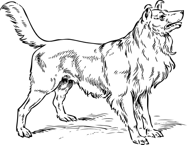 Collie free vector in. Dog clip art realistic jpg free library