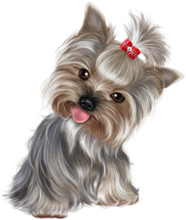Pin by elena vasileva. Yorkie clipart transparent stock