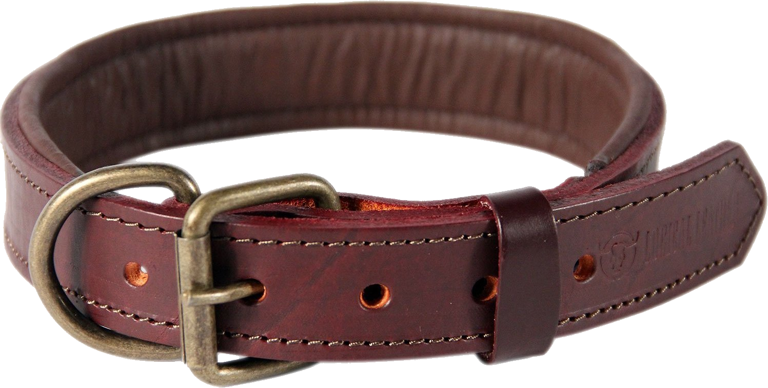 Dog collar png. Images free download