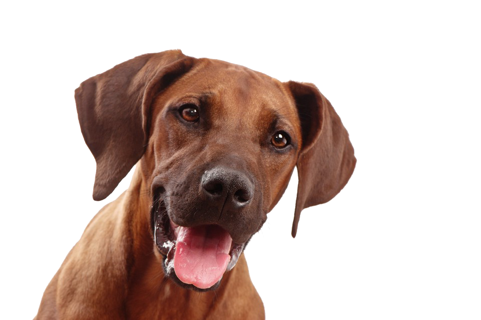 Dog face png.