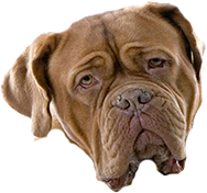 Dog face png. Photo