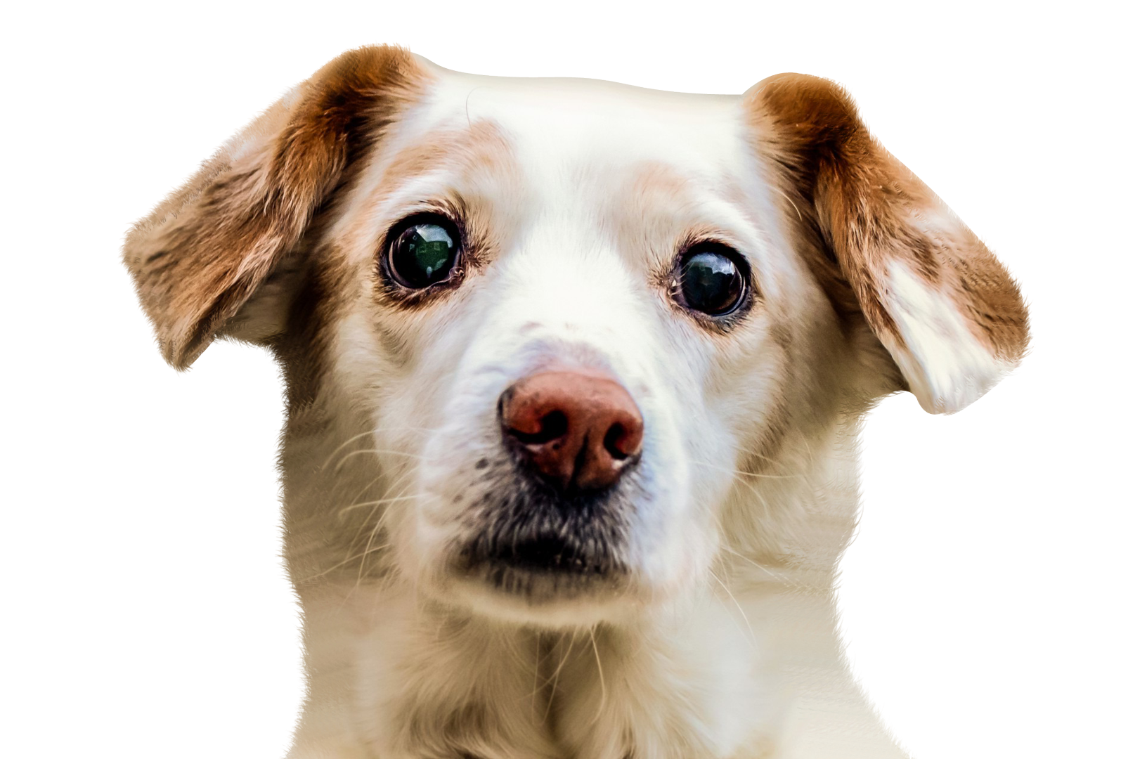 Dog face png. Image