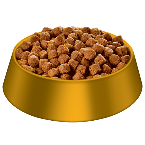 dog food bowl png