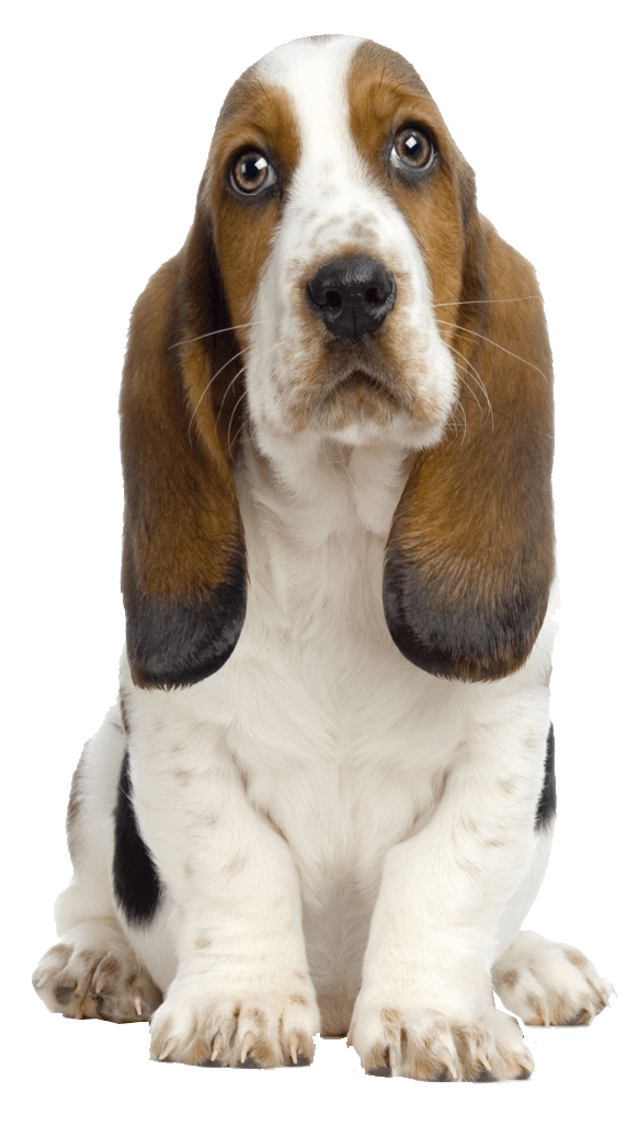 Dog hair png. Transparent background backgroundpluspngcom