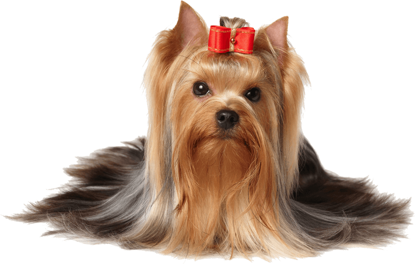 dog hair png