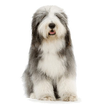 Dog hair png. Removal with carpet