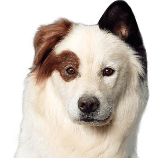 Dog head png. Image stan with a