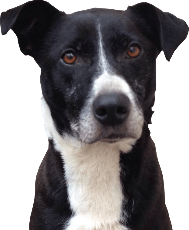 Dog head png. Black and white dogs