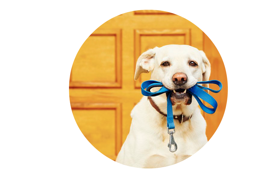 Dog mouth png. Round lab with leash