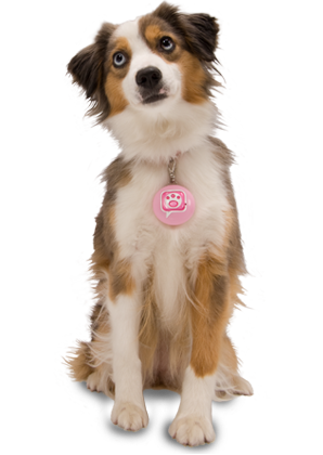 Dogs transparent png. Gallery isolated stock photos