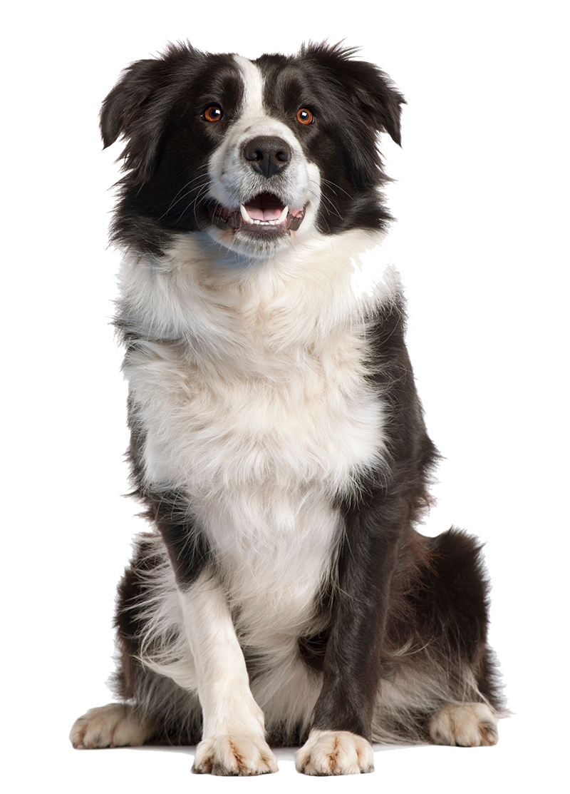 Dog image mart. Png dogs jpg royalty free stock