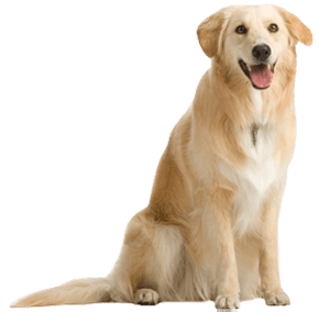 Dog transparent images pluspng. Dogs png vector library stock