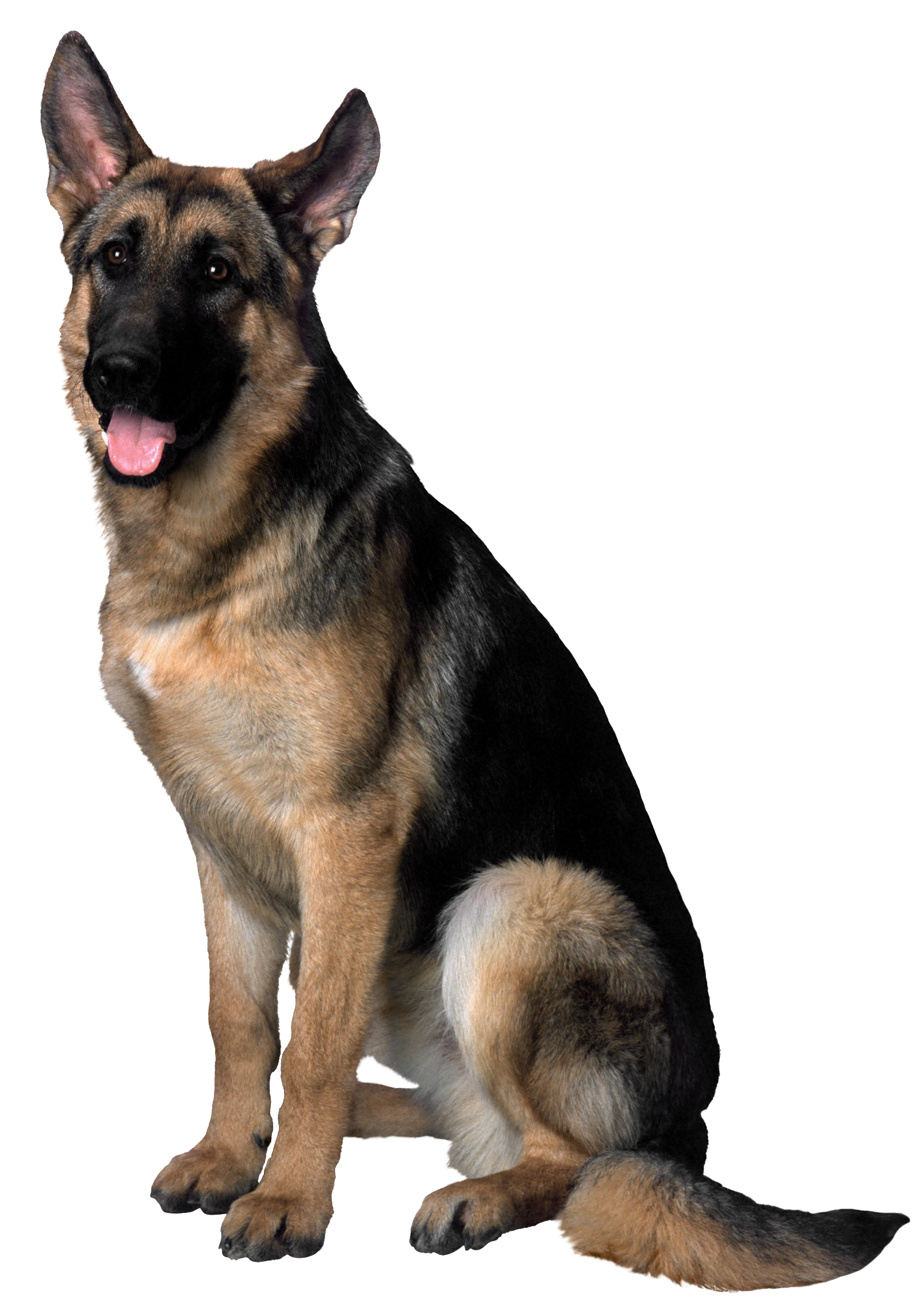 Dog png image. Clip art gallery yopriceville