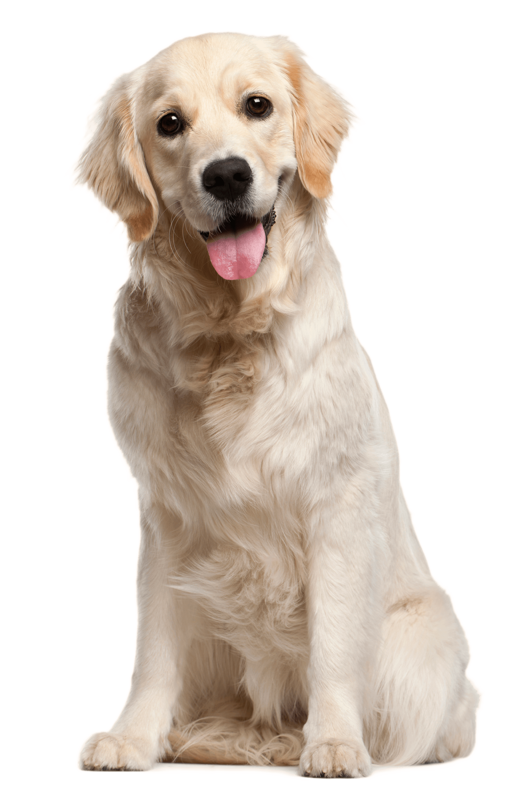 Dog image puppy pictures. Dogs png clipart royalty free library