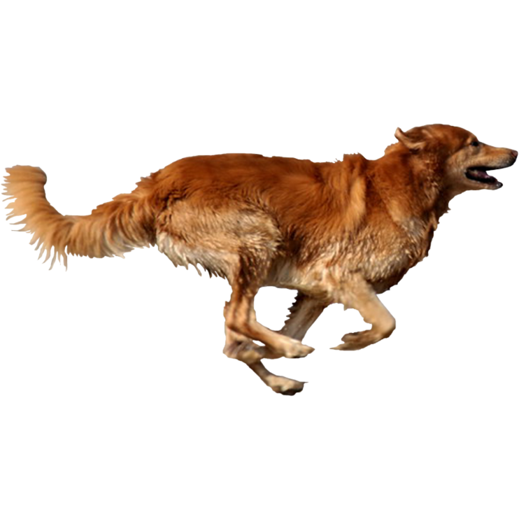 dog running png