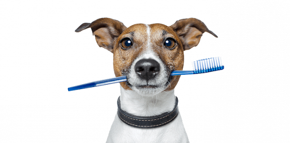 Dog teeth png. Brushing your pets realistic