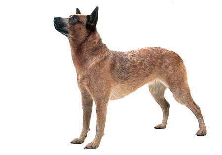 Dog vector png. Use these clipart free