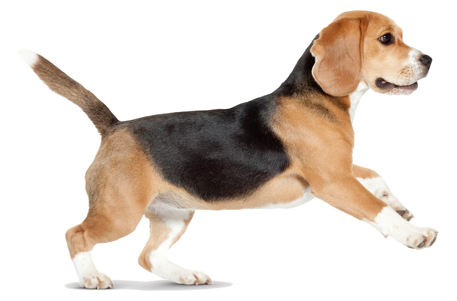 Dog walking png. Image dogs puppy pictures
