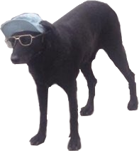 Doggo transparent. Shitpostbot cool