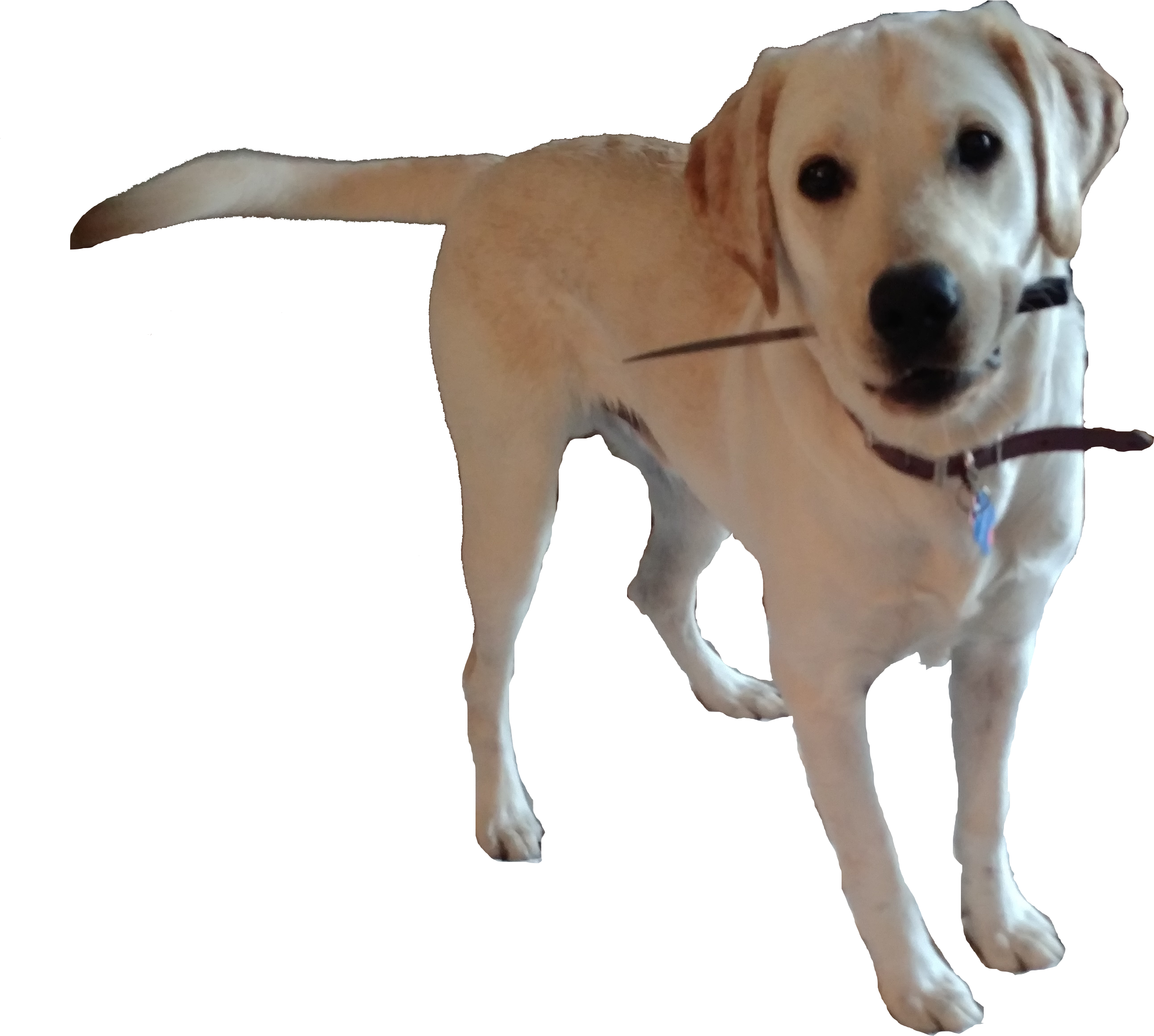 Doggo transparent. Mess with the get