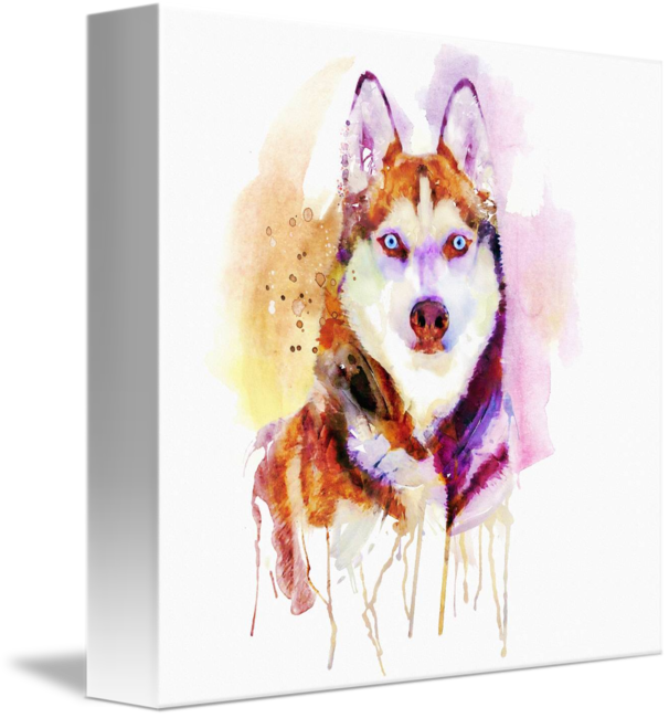 Drawing husky portrait. Dog watercolor by marian