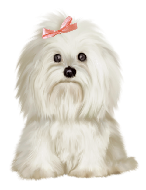 Dogs vector lhasa apso. Dog pinterest maltese
