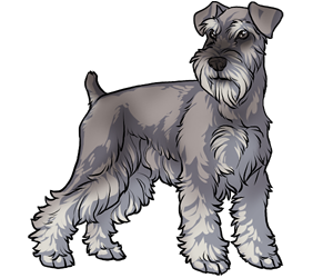 Terrier drawing patterdale. Image result for dog
