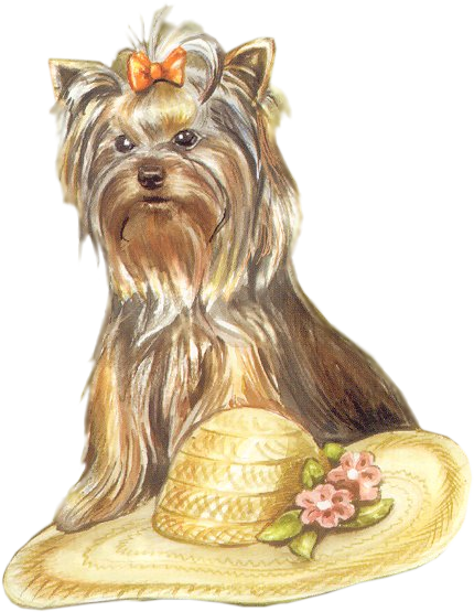 terrier drawing yorkshire