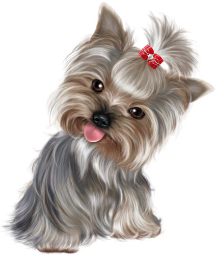 Doggy drawing yorkie. Cd d f