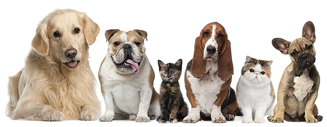 Dogs and cats png. Hd transparent images pluspng