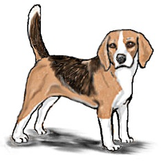 Dogs clipart beagle. Free dog