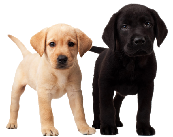 Dogs png. Blackand white puppy freepngdownload