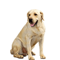 Download dog free photo. Dogs png banner transparent library