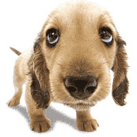 Dogs png. High quality transparent