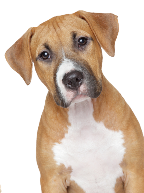 Dog images pinterest. Dogs png banner stock