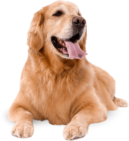 Wagg foods. Dogs png jpg royalty free library