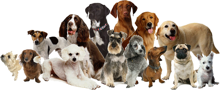 Dogs png. Breeding a dog is