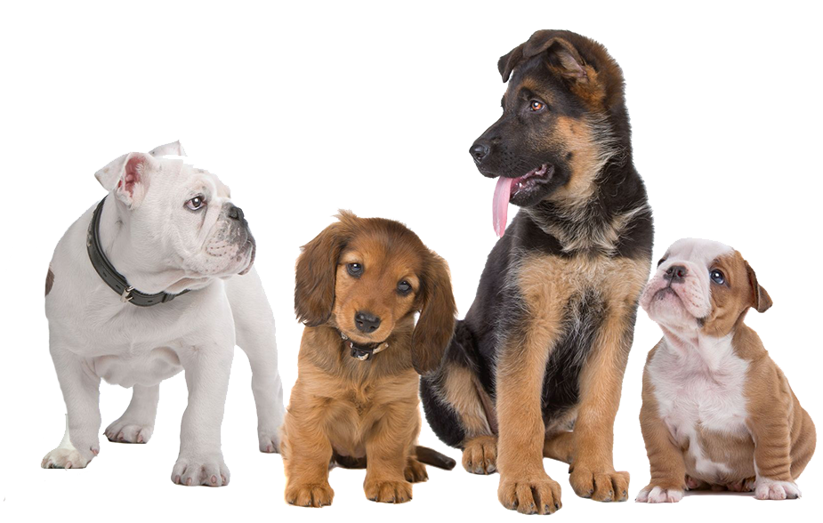 Dogs transparent png. Cat and dog no