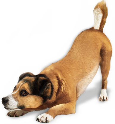 Dogs transparent png. Image without background web