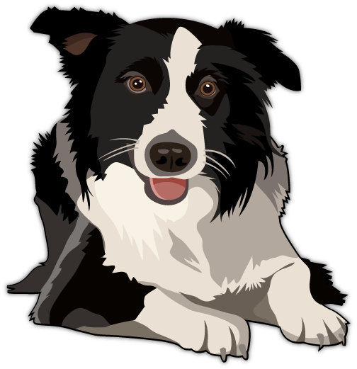 Dogs vector abstract. Border collie design pinterest