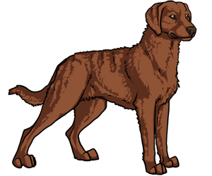 Dogs vector chesapeake bay retriever. Black star kennels free
