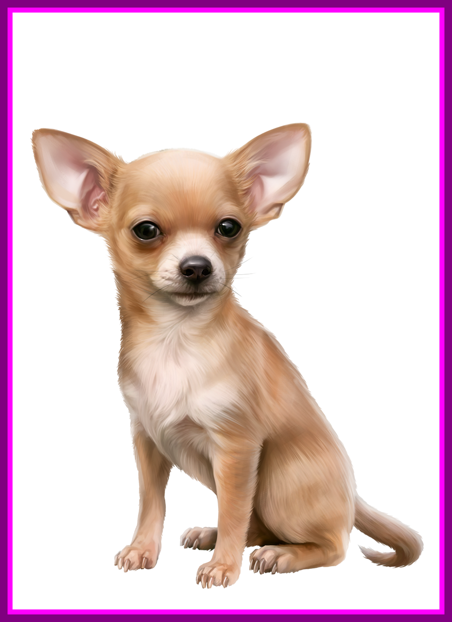 Dogs vector chihuahua. Best oscar png dog