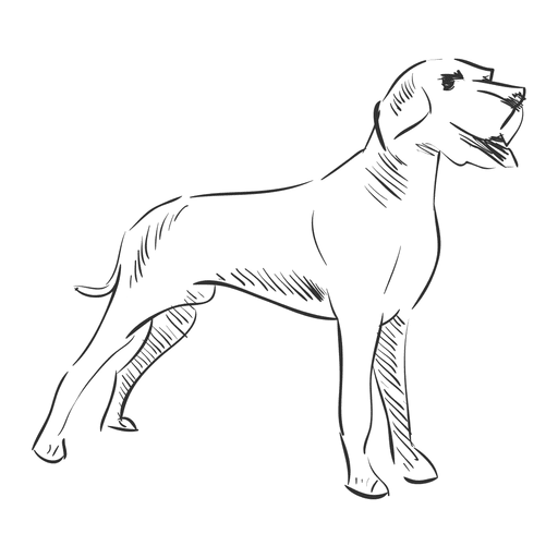 Dogs Vector Hand Drawn Transparent Png Clipart Free Download Ya