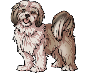 Dogs vector lhasa apso. Collection of dog