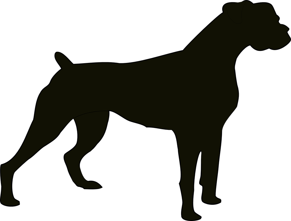 Dogs vector malinois. Dog breeds proud of