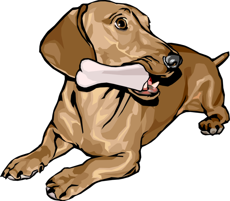 Dogs vector realistic. Dachshund dog with bone