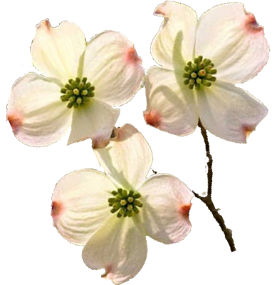 Dogwood flower png. Picture library dogwoodbloomspng