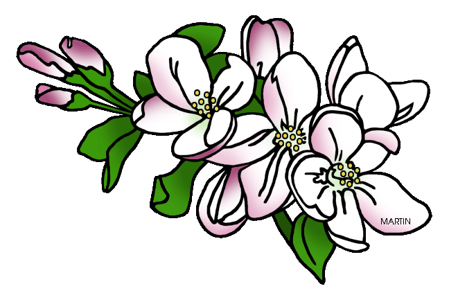 Dogwood vector blossom. Collection of free blossomed